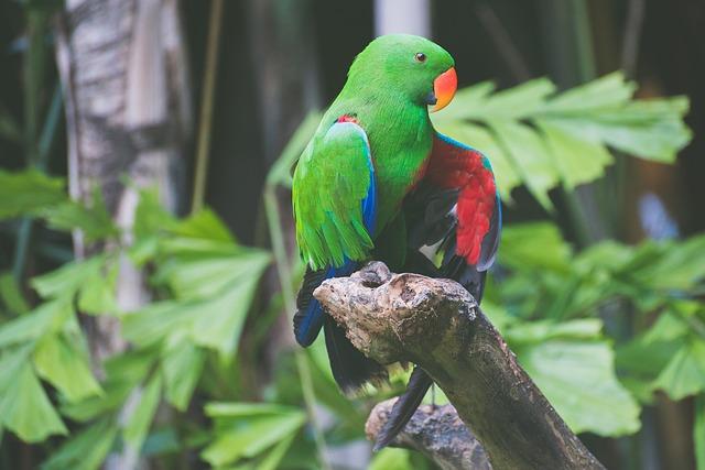 exotický pták.jpg